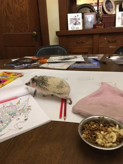 Harriet's Hedgehogs and Autism Advocacy